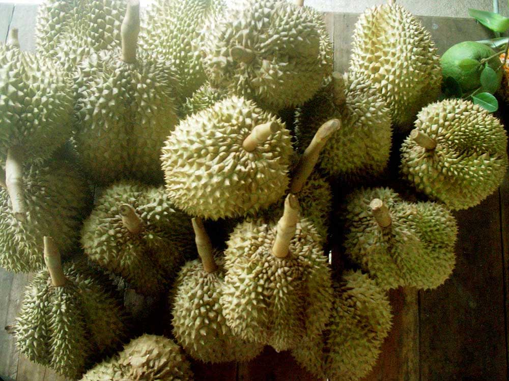 """""""Durian"""