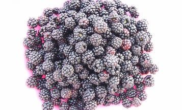 How to Escape Your Suburban Office Complex and Forage for Wild Berries