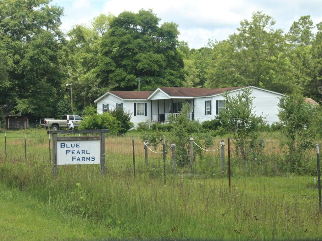 Blue Pearl Farms, McClellanville, SC