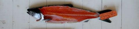 httpswww.saveur.comsitessaveur.comfilesimport2008images2008-05634-112_know_your_salmon_5_480.jpg
