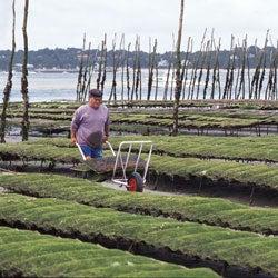 Farmers of the Sea