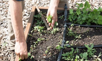 Building a Garden: All About Weeding