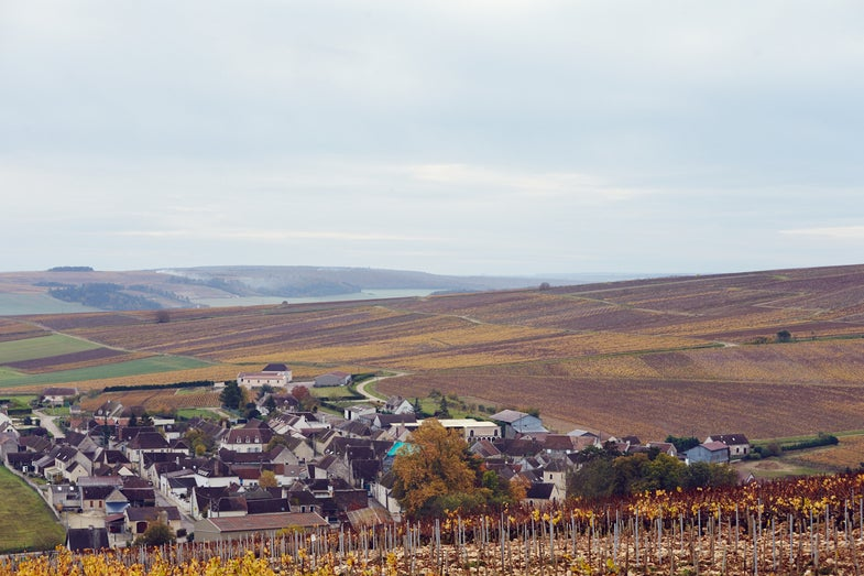 Adam Gollner on the Basics of Chablis—and How to Visit