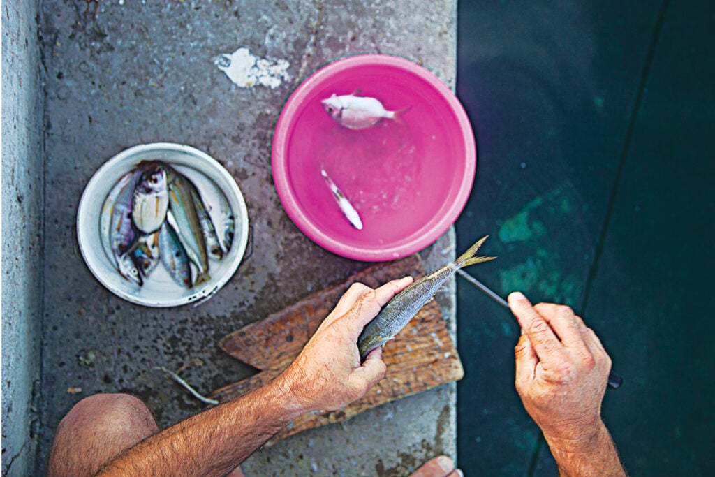 httpswww.saveur.comsitessaveur.comfilesimport20142014-03scenes-from-the-dalamatian-coast-cleaning-fish-1200×800-i164.jpg