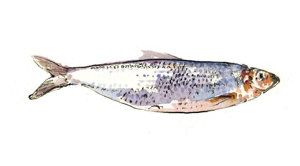 """sardines"""