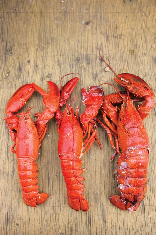 feature-travel-guide-st-pierre-and-miquelon-lobsters-500x750-i164