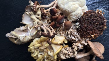 Unique Mushrooms