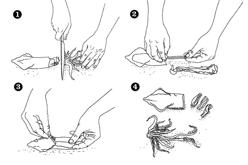 How to Clean Calamari