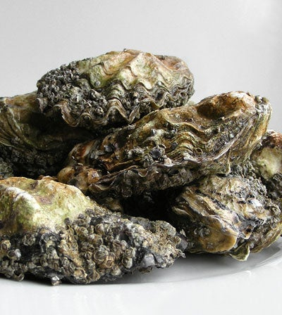 How Long Can You Store Oysters?