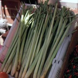 Selecting and Storing Lemongrass