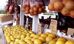 Uncommon Oranges