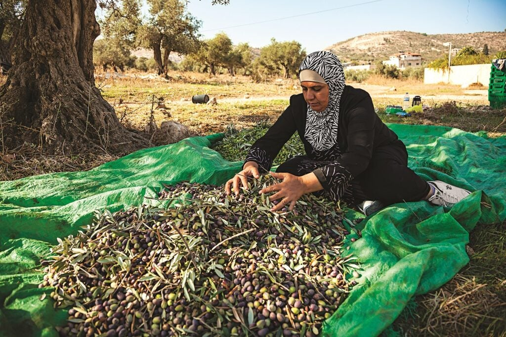 slideshow-scenes-from-palestine-cleaning-olives-1200x800