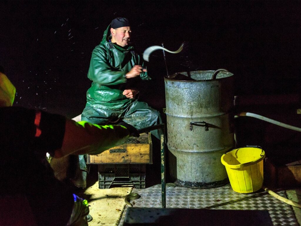 English Eel Fisherman