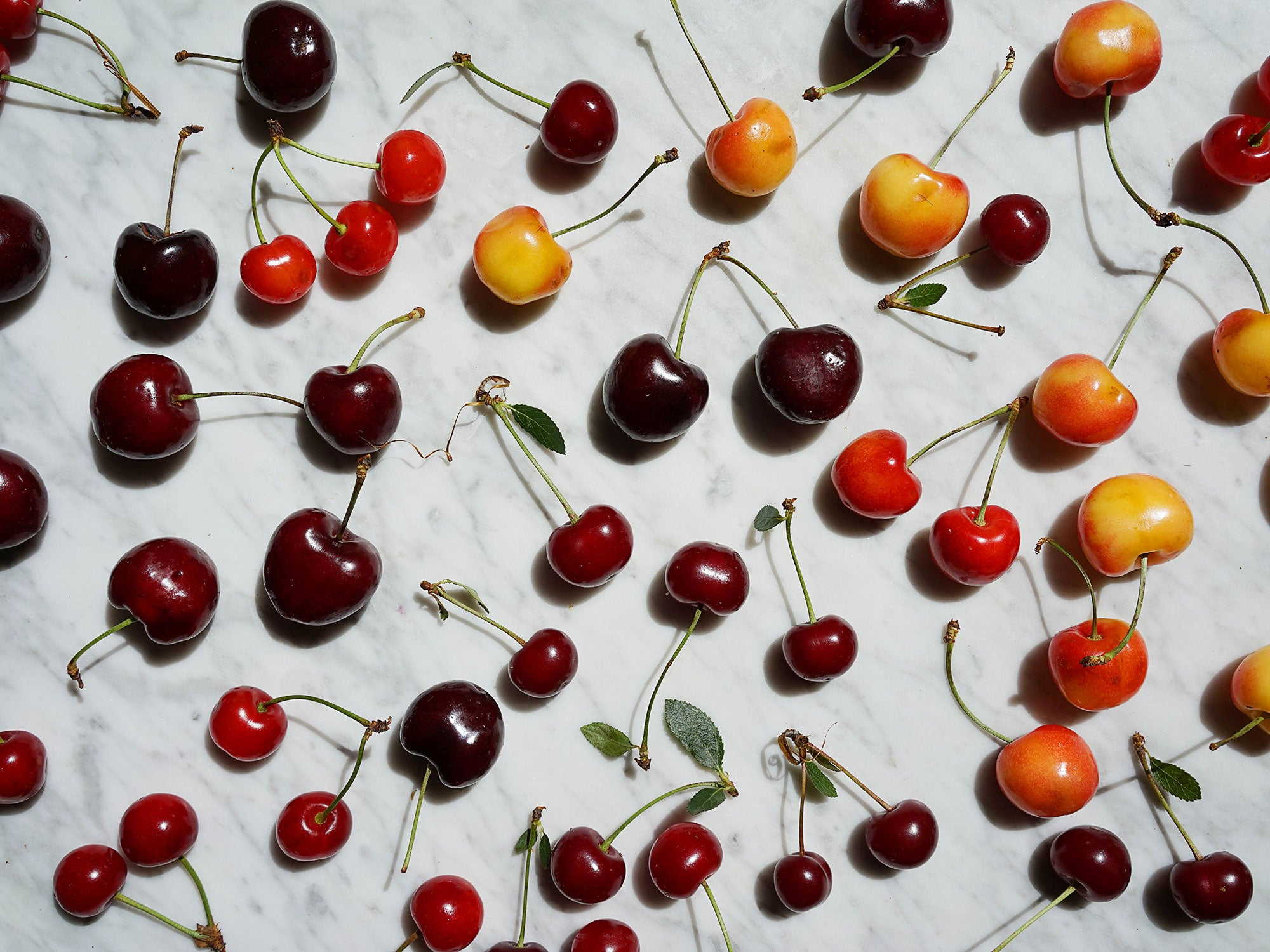 All the Crazy Things Farmers Do to Bring You Their Cherry Crop