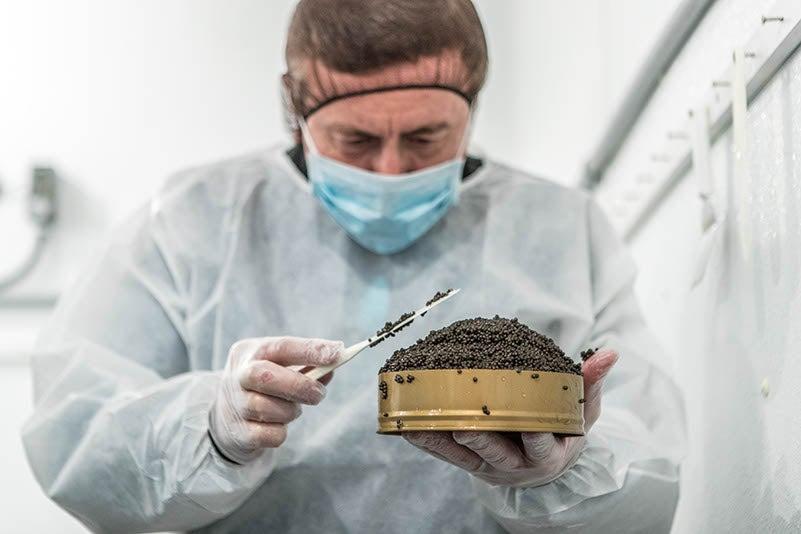daniel boulud caviar