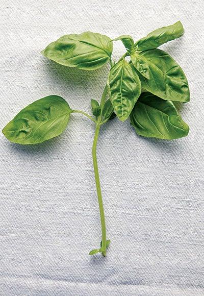 Many Shades of Green: Basil Varieties