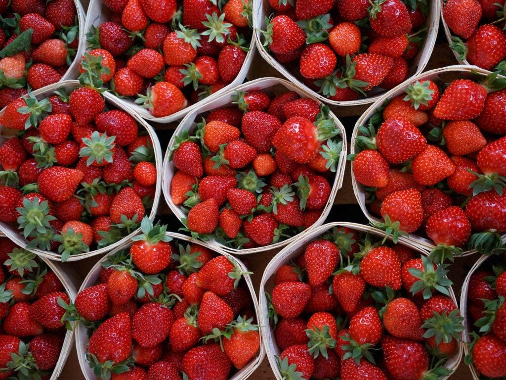 Mara de Bois Strawberries