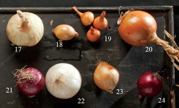 types of onions Siskiyou onion, turbo onions, Stuttgarters, copras, Wethersfields, White granex, Australian browns, Red baron