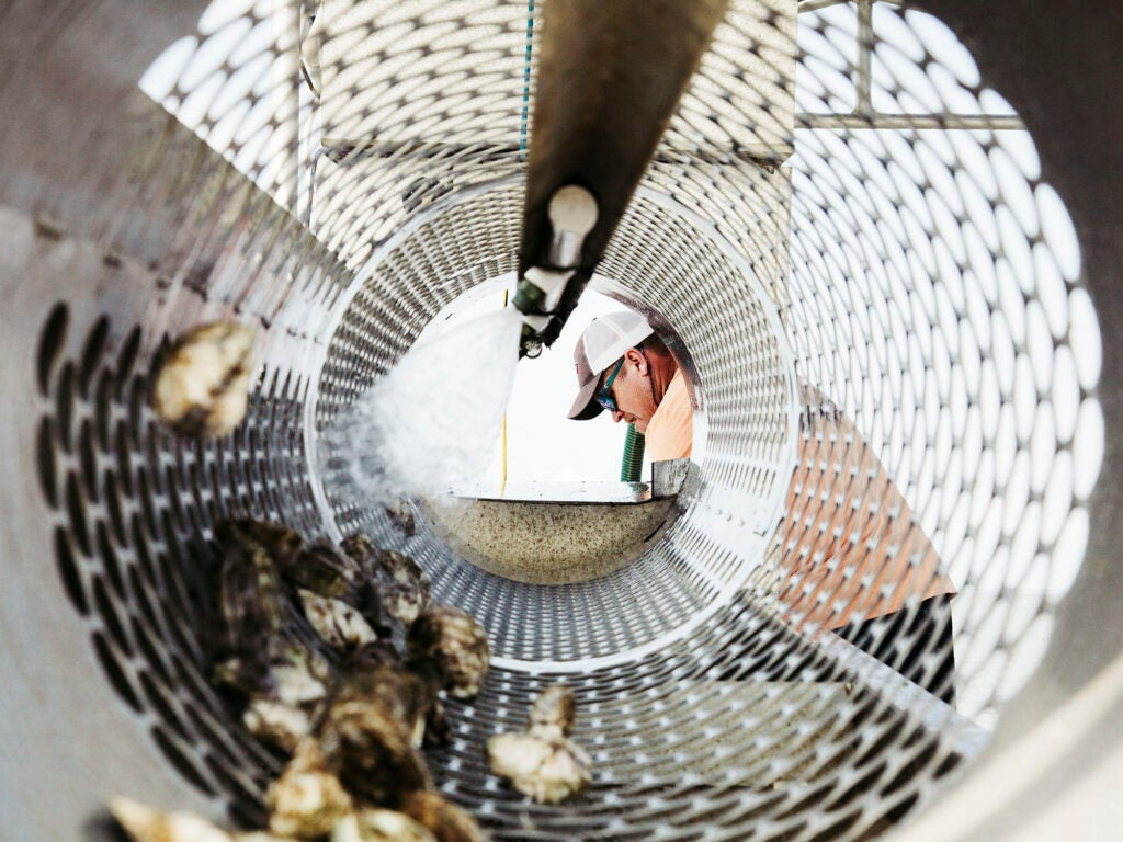 httpswww.saveur.comsitessaveur.comfilesimages201607wes-frazer_oysters-7_2000x1500.jpg