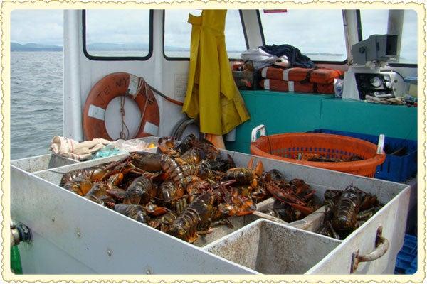 httpswww.saveur.comsitessaveur.comfilesimport2011images2011-087-lobster-postcard-600.jpg
