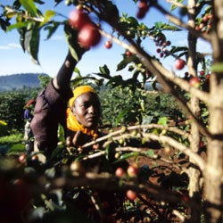 The New Frontier of Quality Coffee