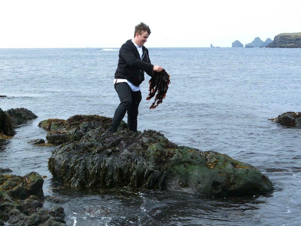 Truffle Seaweed