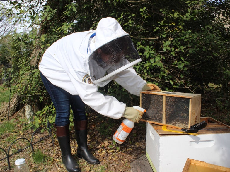 Diary of an Accidental Beekeeper