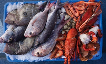 The World of Fish Markets