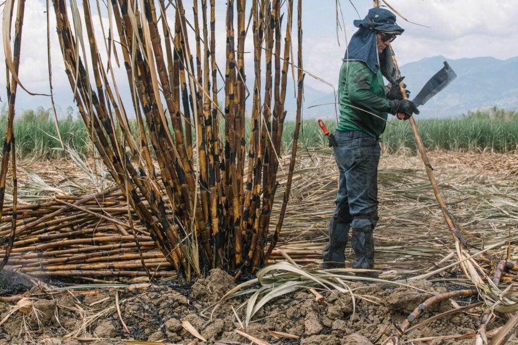 Sugar Cane Cutter Colombia Valle de Cauca