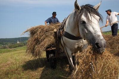 Barbu Petru and Tulbure Nicolae gather hay in Crit