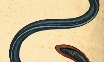 Eel: America's First Fish