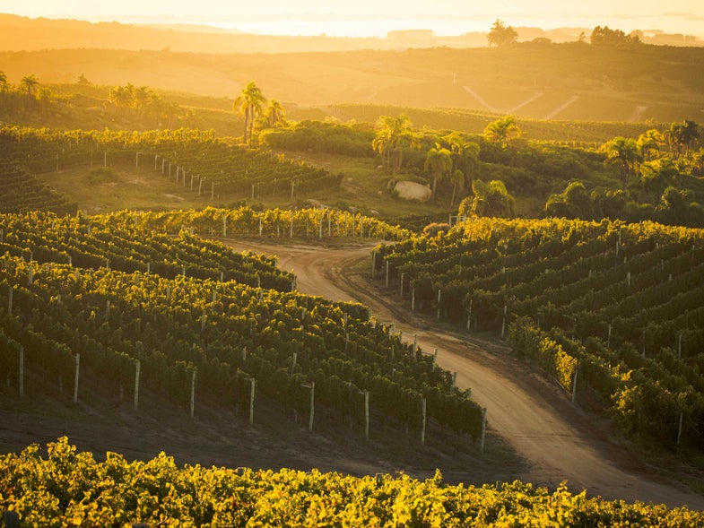 Your Next Great Wine Trip is to…Uruguay?