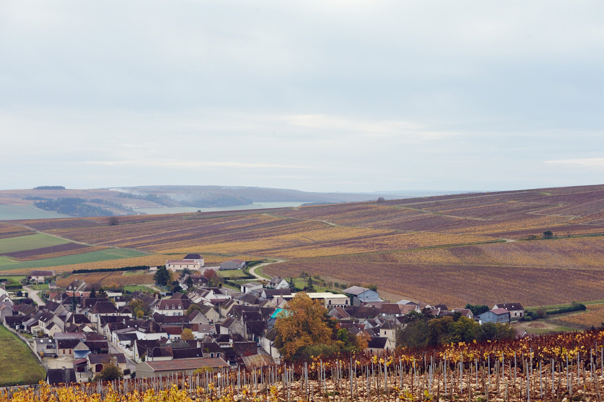 Scenes from Chablis
