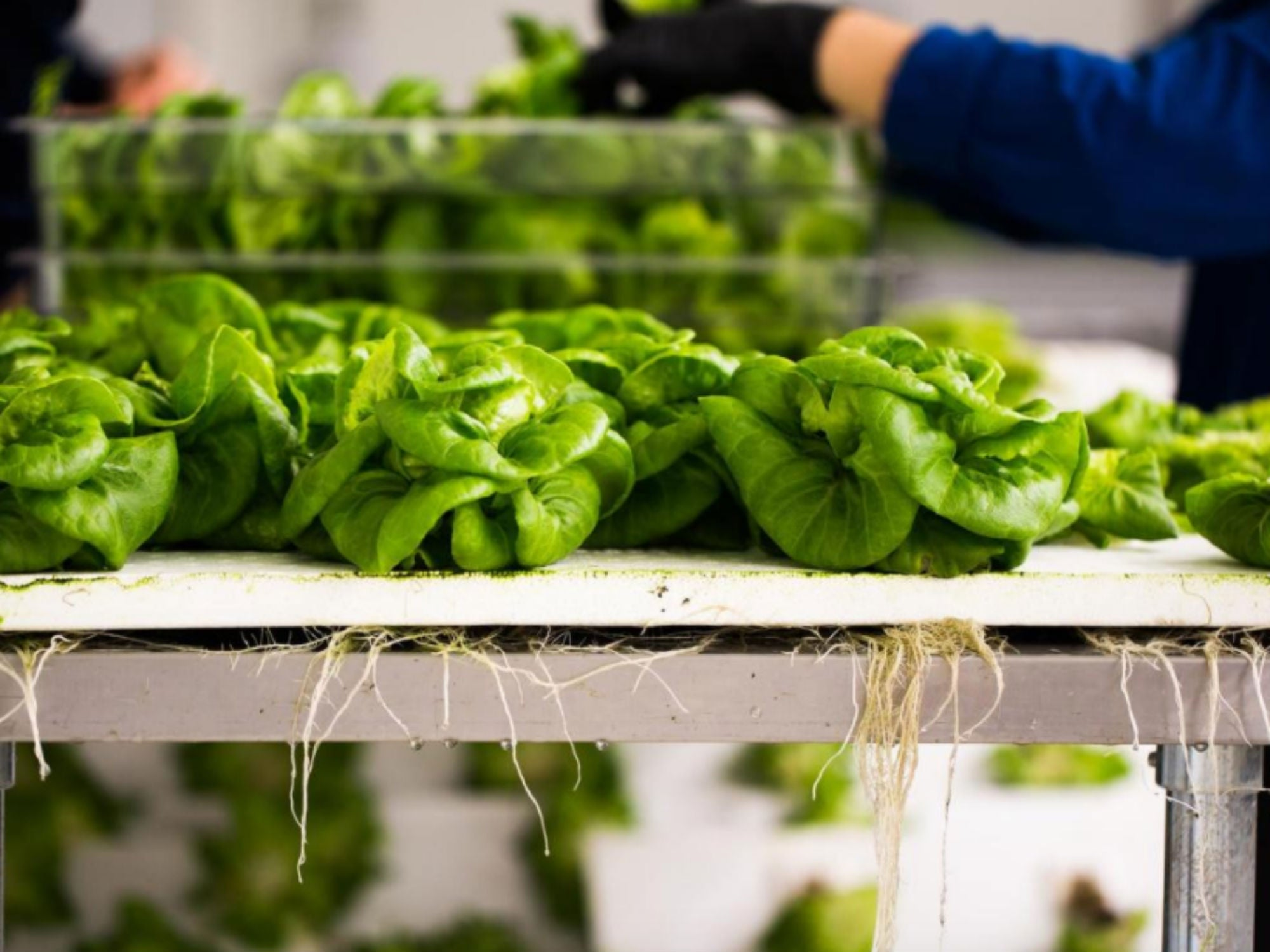 Could Indoor Farming Be the Future of Agriculture?