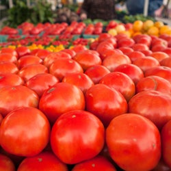 Scenes from the Sarasota Farmers Market