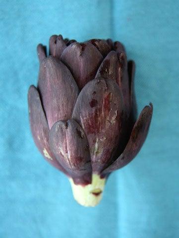 fiesole artichoke