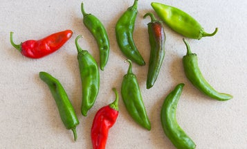 Where to Buy Real Deal Hatch Green Chiles Online
