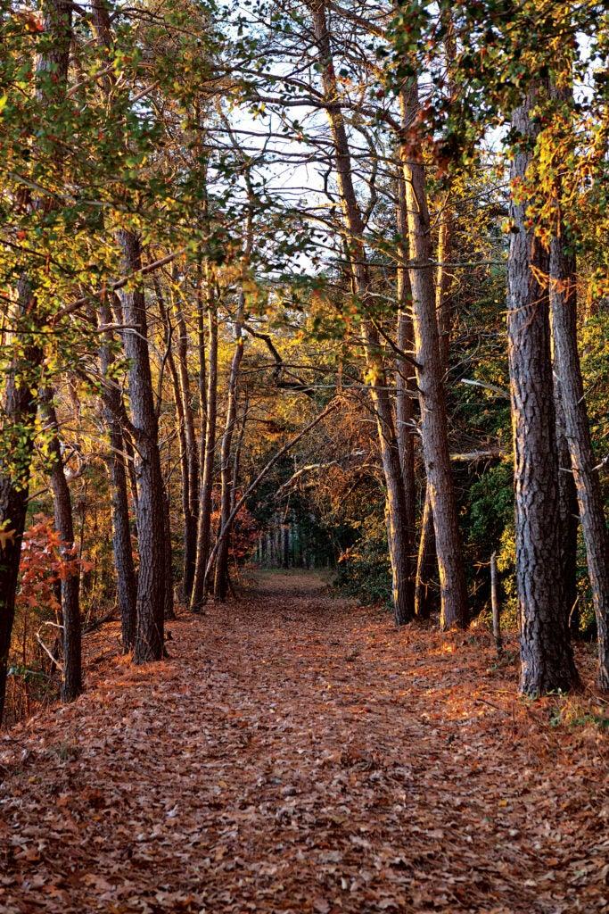 A path to Westerhouse Creek