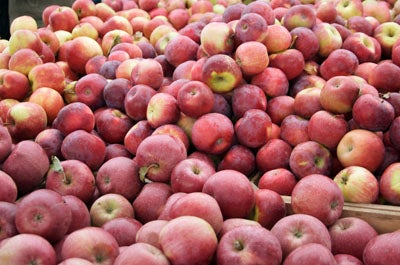 Tasting Notes: 18 Varieties of Apple