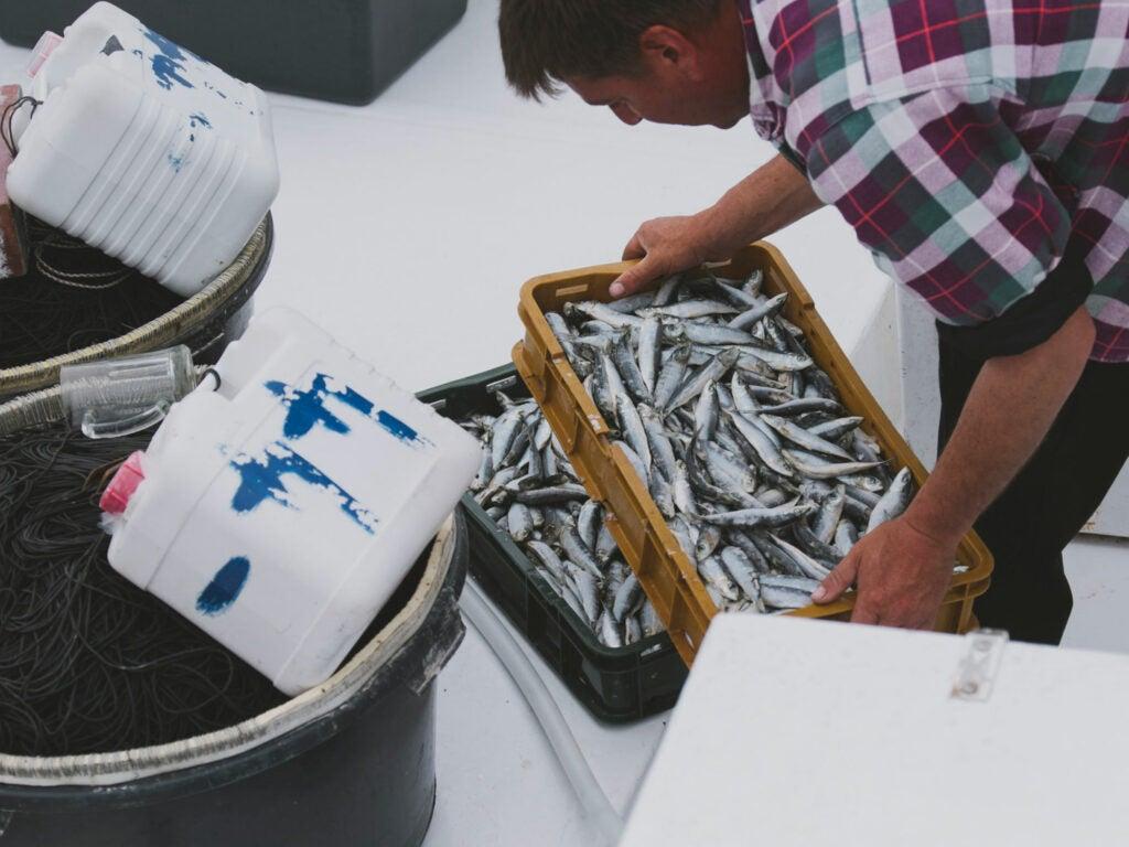 Croatia fisherman