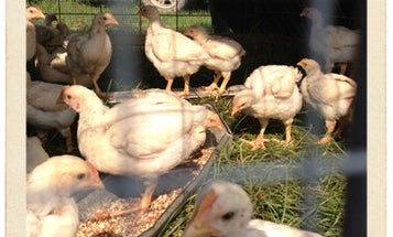 Postcard: Iverstine Family Farms