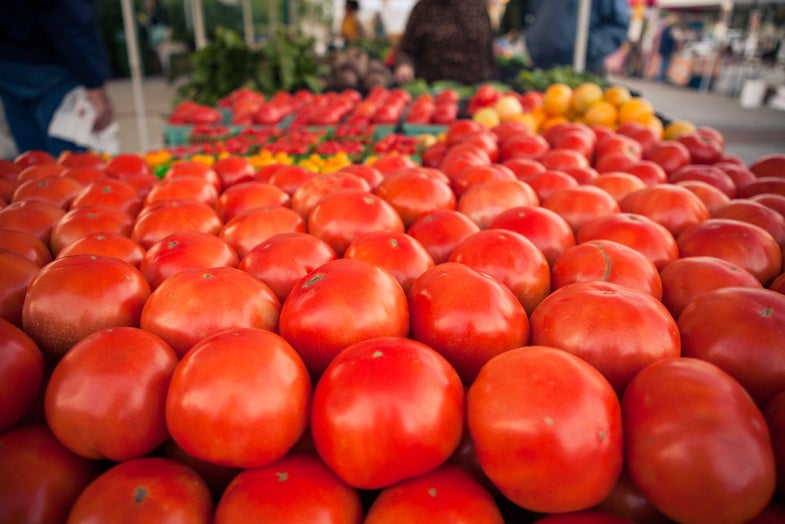 Building a Garden: How to Plant Tomatoes