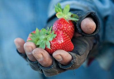 Sweet Crusade: Jim Cochran's Strawberry Secrets