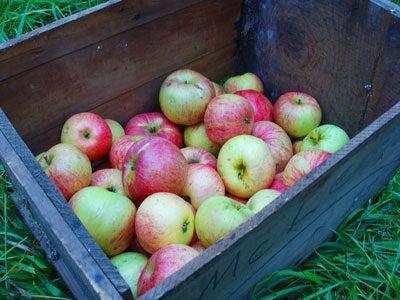 Preserving Heirloom Apples