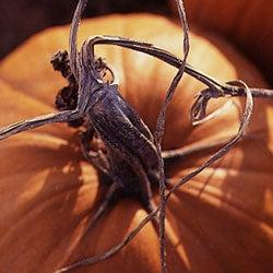 Beyond The Pumpkin Patch