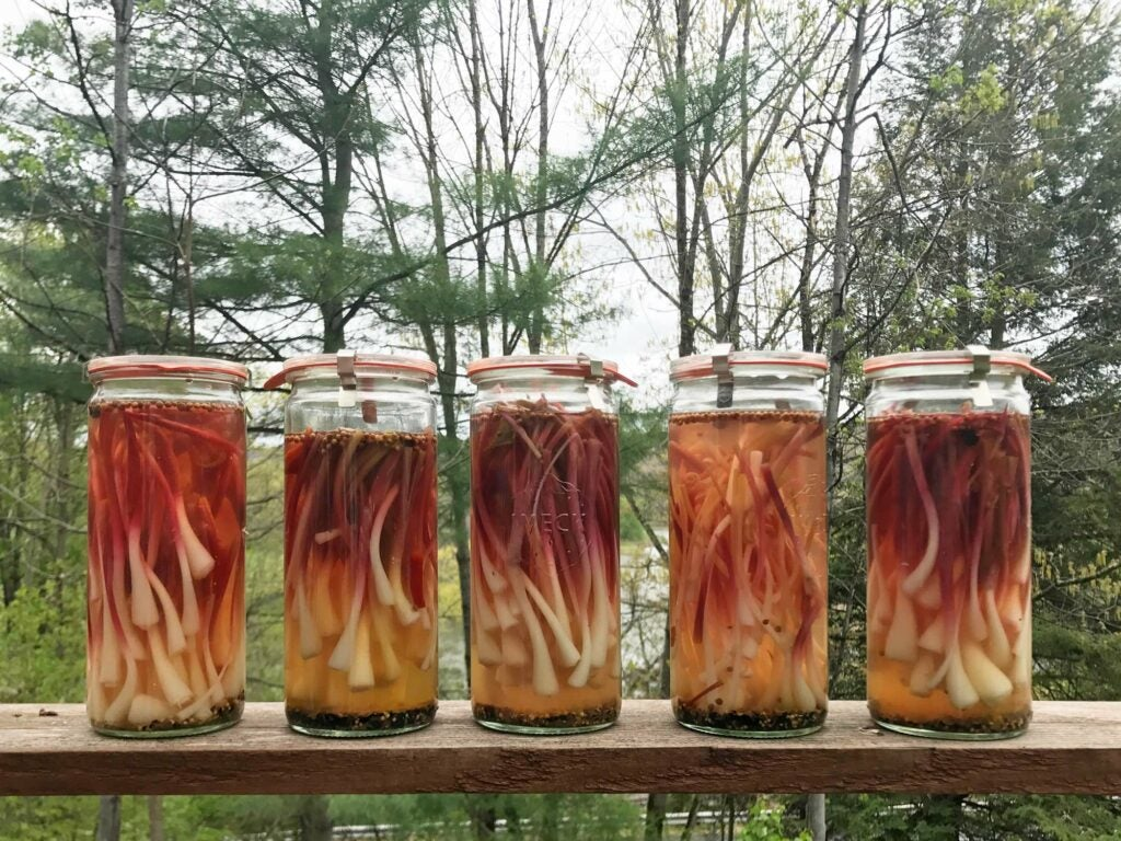 ramps foraging pickles