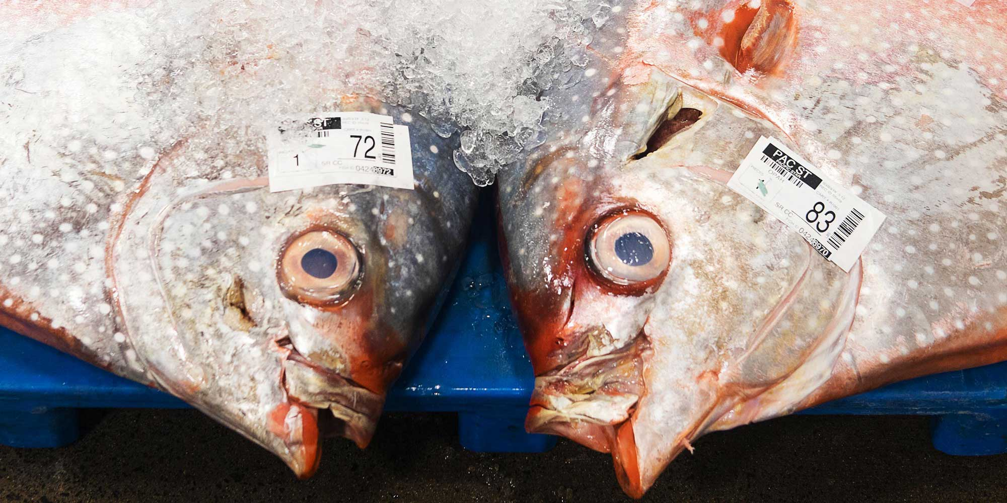 Why Honolulu's Fish Auction Matters