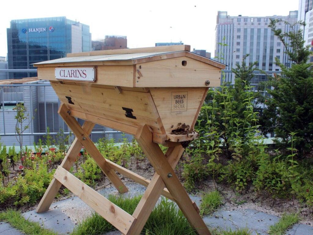 Beekeeper in Korea