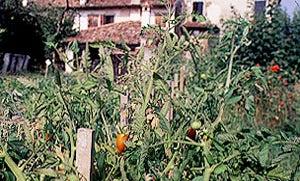 Italian Farmhouse Feasts
