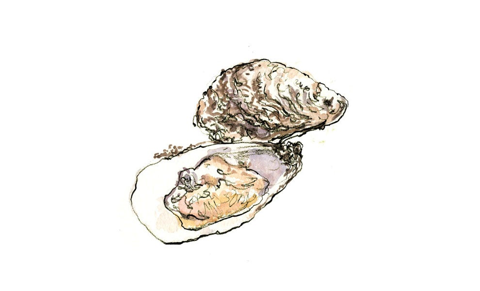 """""""oysters"""""""
